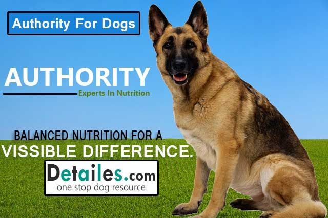 Authority Dog Food Dog Food Recipes Dog Food Reviews Best Dog Food