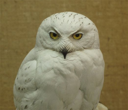 Snowy owl carved by bob guge bird and animal carvings