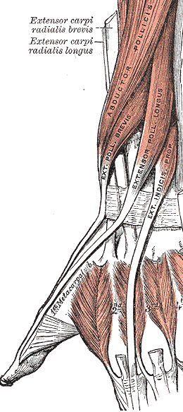 human anatomy : Pelvic Bone Anatomy #anatomy #bone #pelvic | Level 2 ...