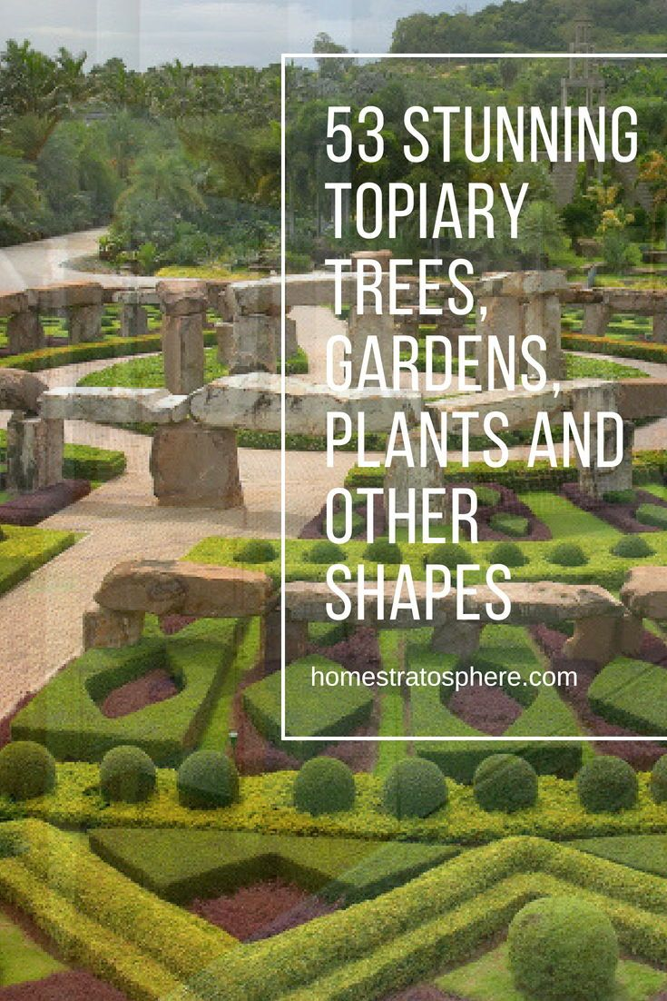 Garden landscape trees   Stunning Topiary Trees Gardens Plants and Other Shapes