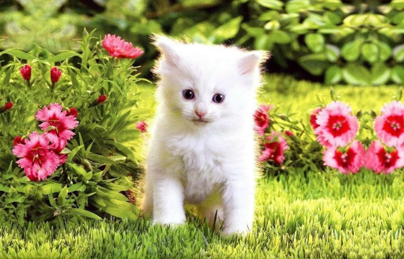 wallpaper of cats and kittens | cats | pinterest | cat wallpaper