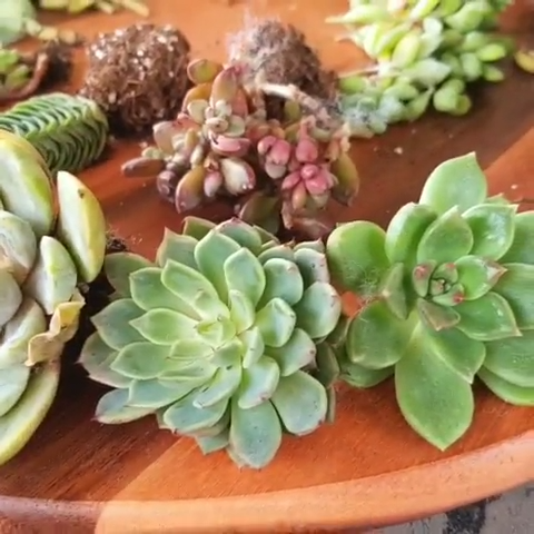 Photo of Replanting succulents ?