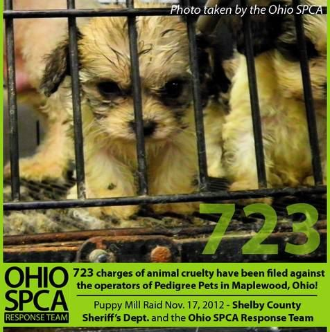 Ohio To Make First Offense Pet Cruelty A Felony With Goddard S Law Animal Rescue League Pets Animal Rescue Stories