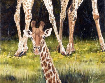 3 Baby Giraffe