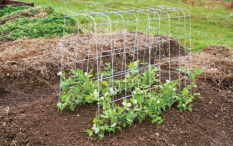 How to build an arched vegetable trellis diy trellis for Vegetable garden pergola