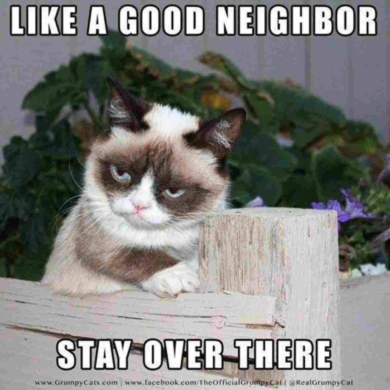 Funny Cat Memes Dump 2018 54 Pictures Ladnow Grumpy Cat Quotes Grumpy Cat Humor Grumpy Cat Meme