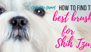 Shih Tzu Haircuts 3 Fun And Easy Styles For Your Shih Tzu Shih Tzu Haircuts Shih Tzu Shih Tzu Funny