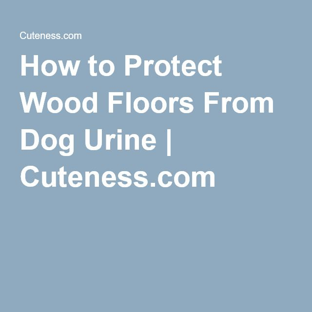 How To Protect Wood Floors From Dog Urine Cuteness Dogs