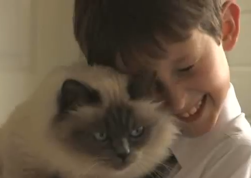 Cat Helps Mute Boy Say Cats Cat Help National Cat