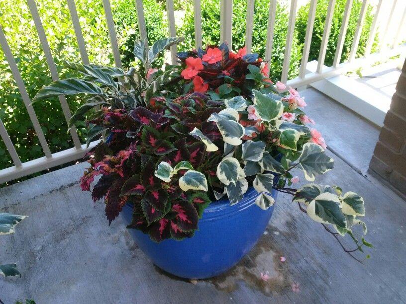 Summer in Loveland, Ohio Plants, Flowers, Garden