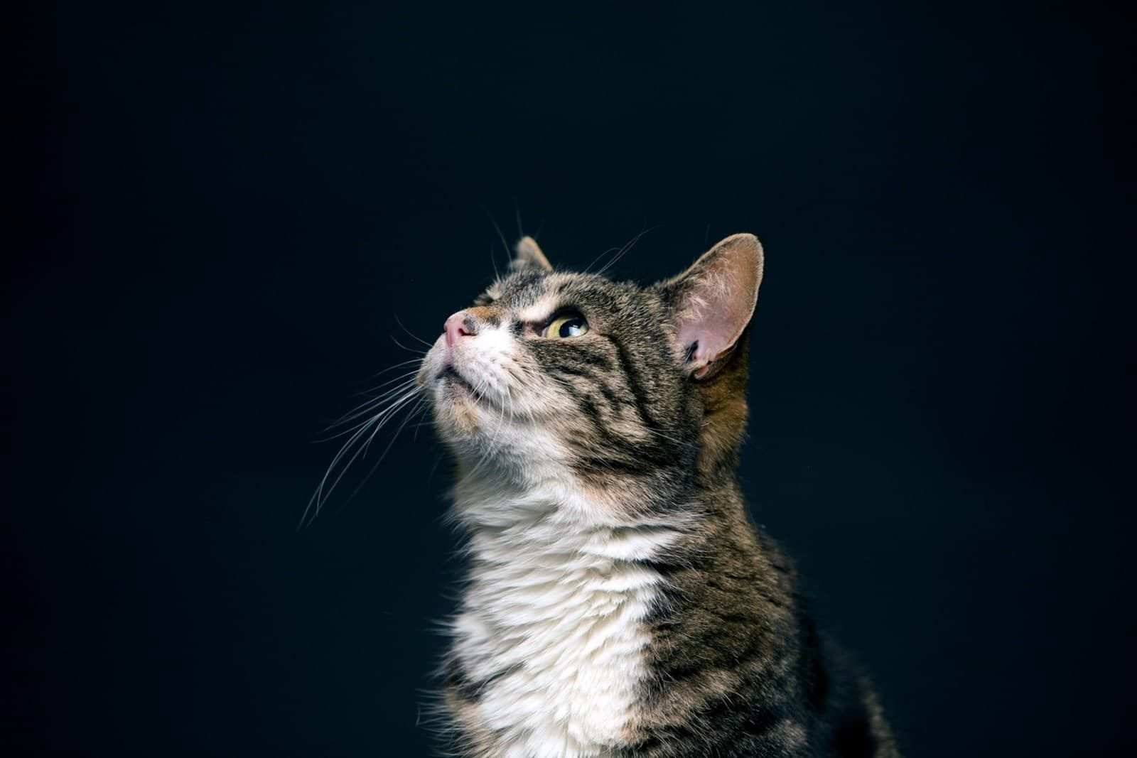 Cats protection uks largest feline welfare charity
