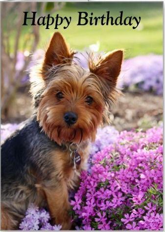 Happy Birthday Gluckwunsche Grusse Pinterest Terrier Hunde