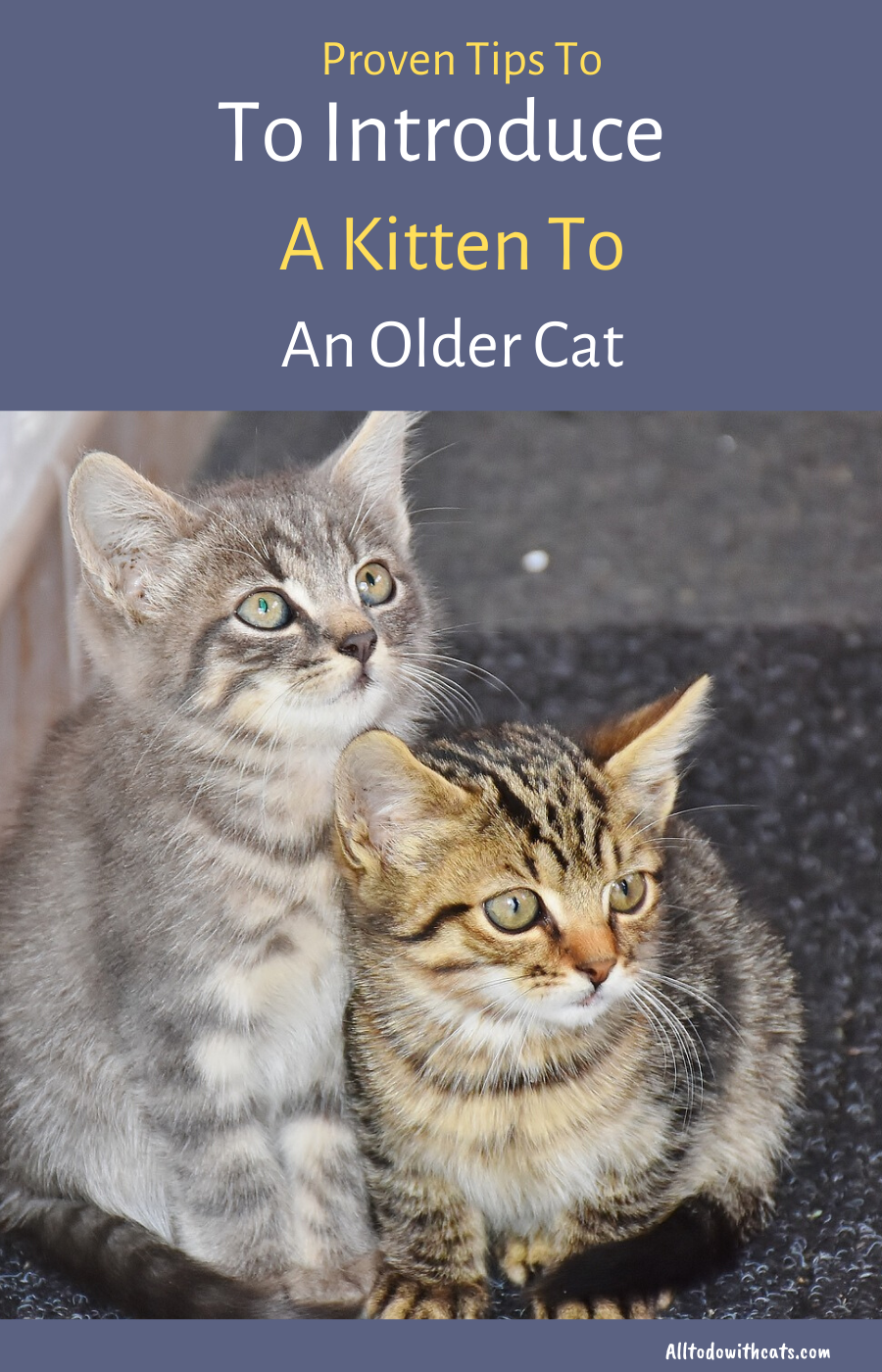 How To Introduce A New Kitten To An Older Cat Proven Tips In 2020 Older Cats Cats Introducing A New Cat