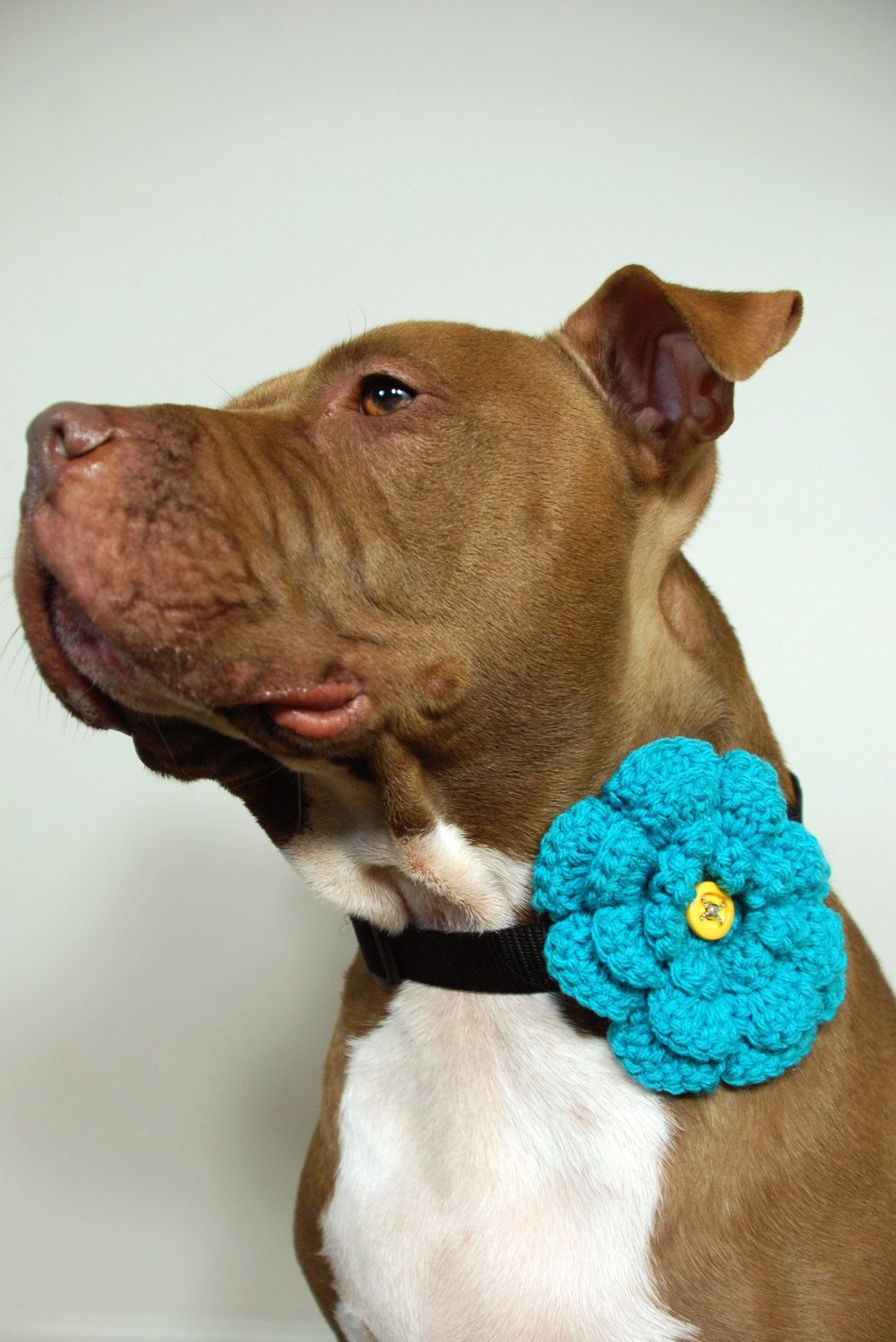 Dog Collar Flower Clip On Teal Crochet Large For Furry Friends