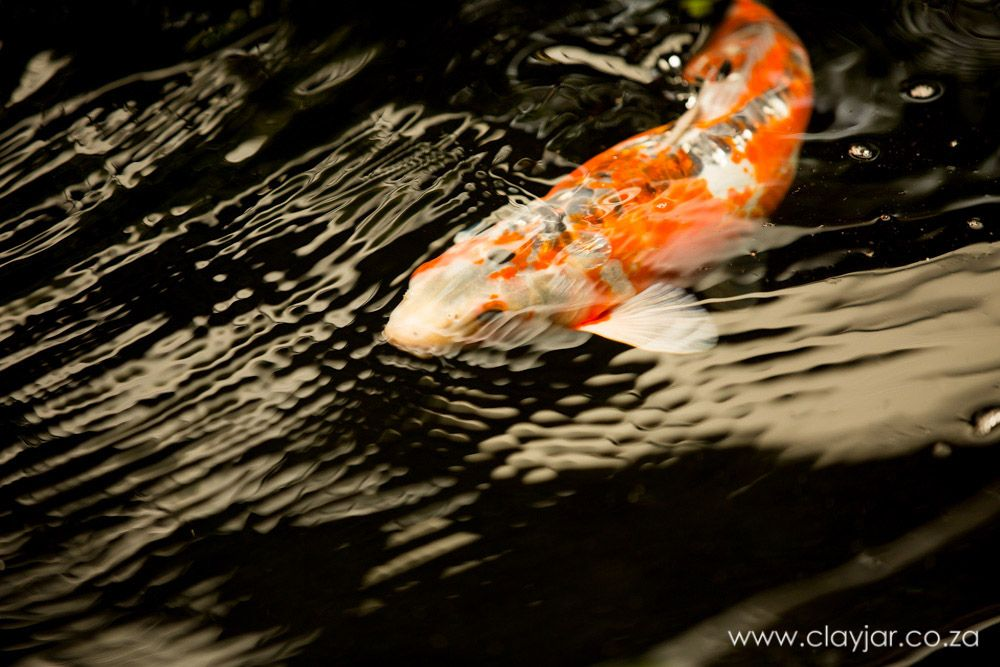 Khoi Fish | Cape Town Photographers | Clay Jar Photography