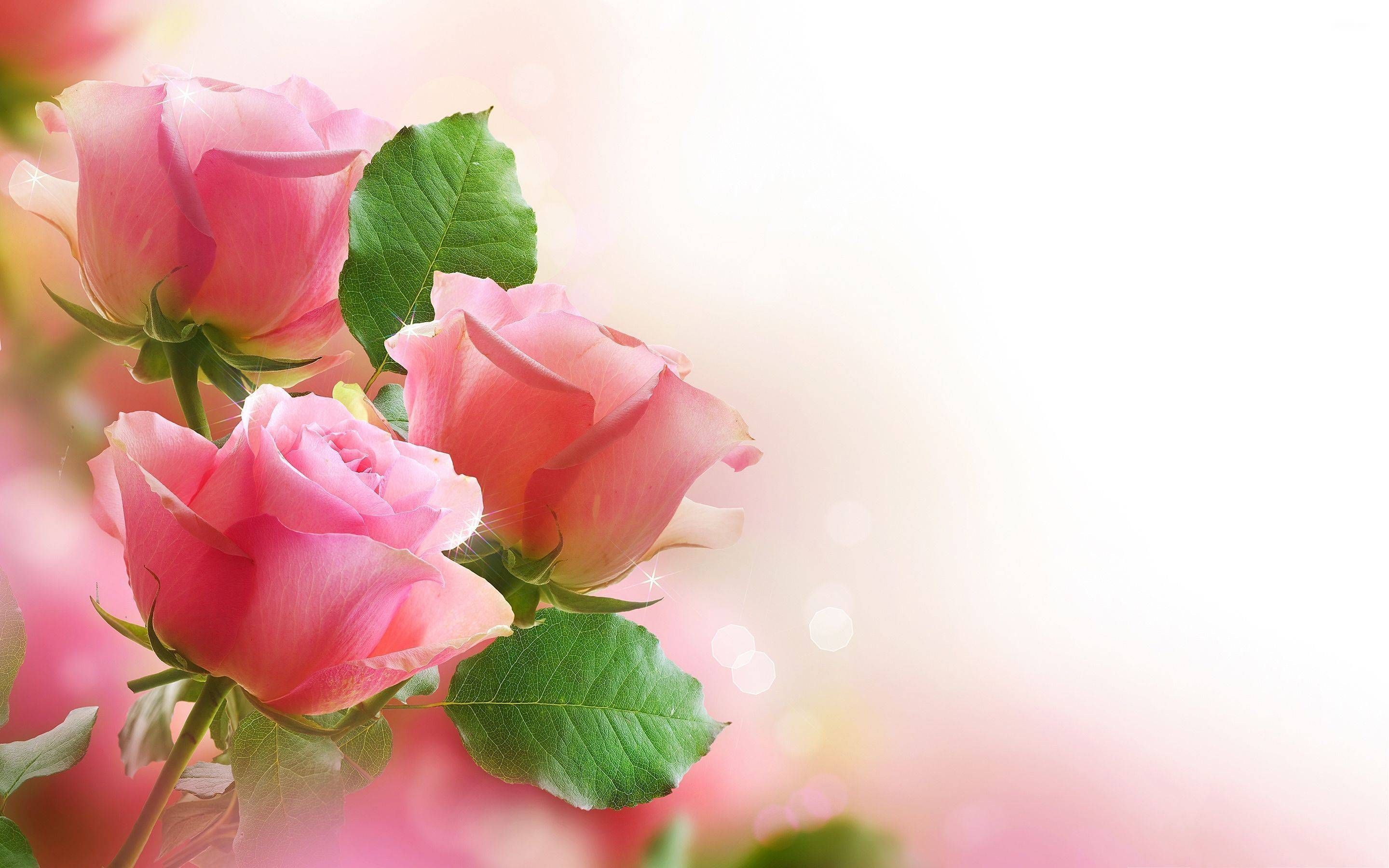 Hd Wallpaper Pink Rose Best Wallpaper Hd Beautiful Flowers Wallpapers Pink Roses Background Flower Wallpaper