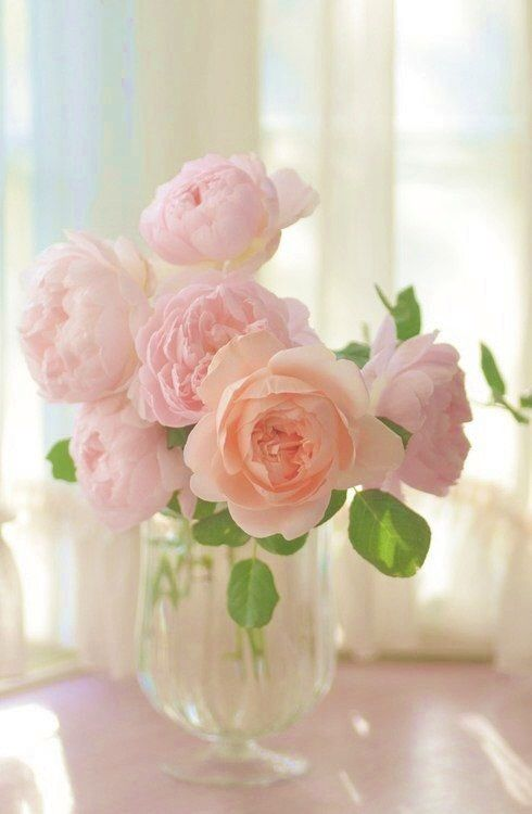 ✧☼☾Pinterest: DY0NNE #roses