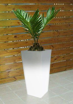 Tall Pot Plant Ideas Google Search