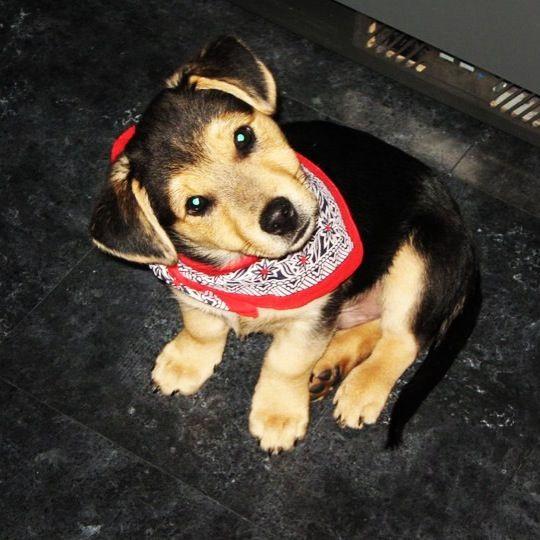 This is my dog Django cutie