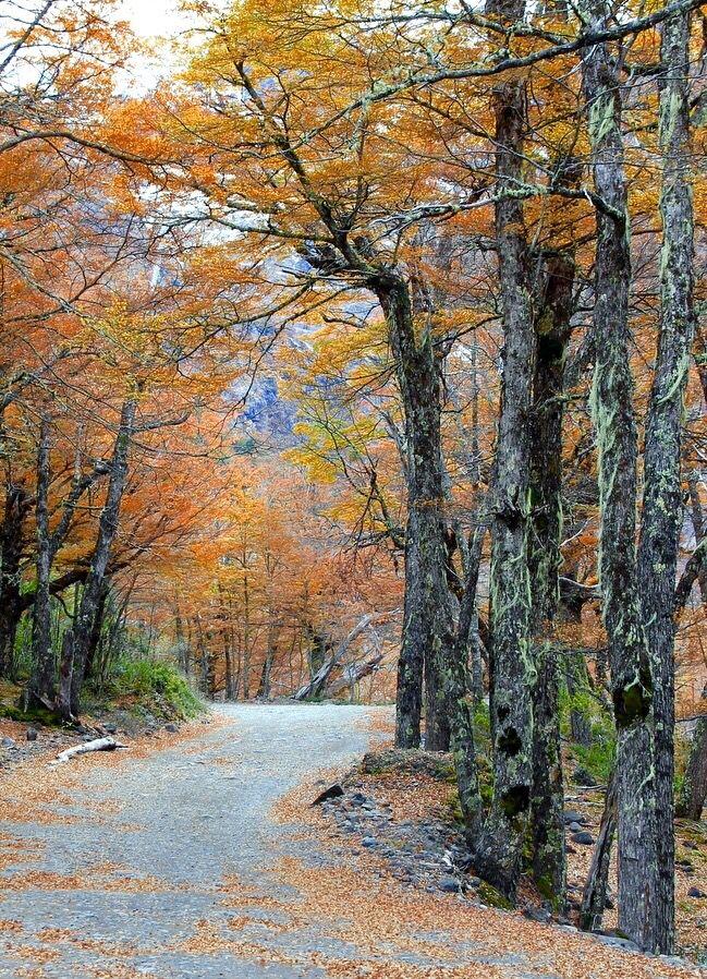 Resultado de imagen para bosque de lengas bariloche