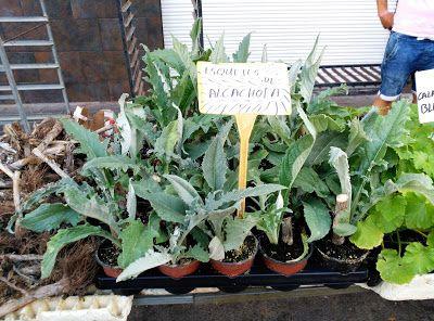 Huerto casero de quiquet con que podemos sembrar y for Huerto urbano que plantar