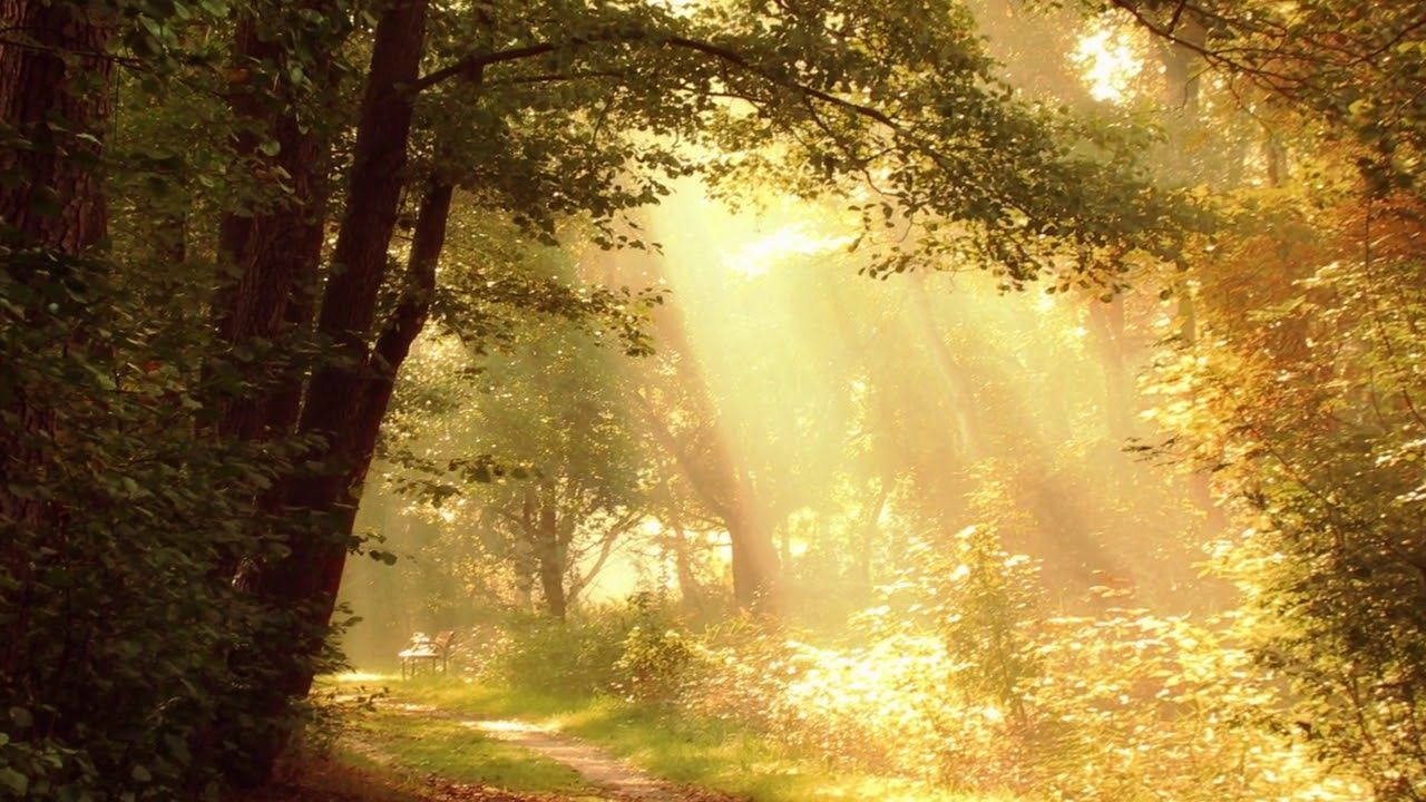 Sun Rays Romantic Path No Copyright Royalty Free Footage Https Youtu Be Unlkwixect0 Free Footage Moving Backgrounds Greenscreen