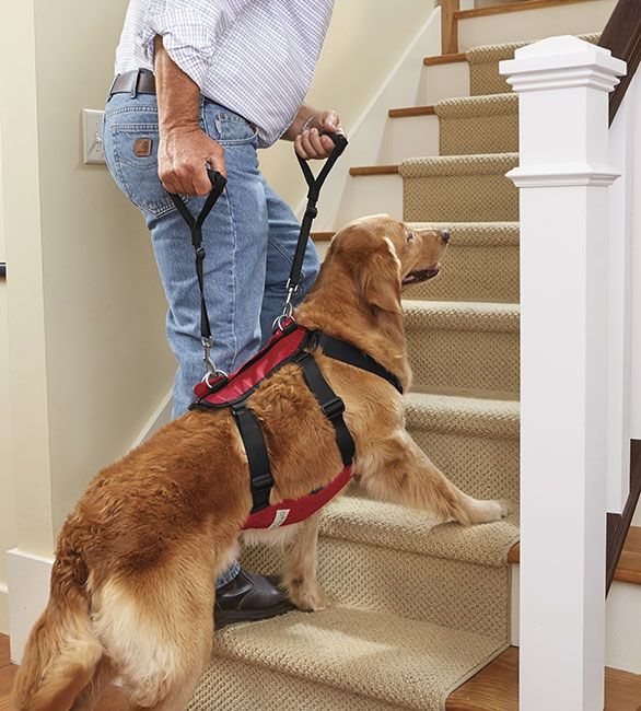 Our easy-to-use harness cradles and supports your dog completely and