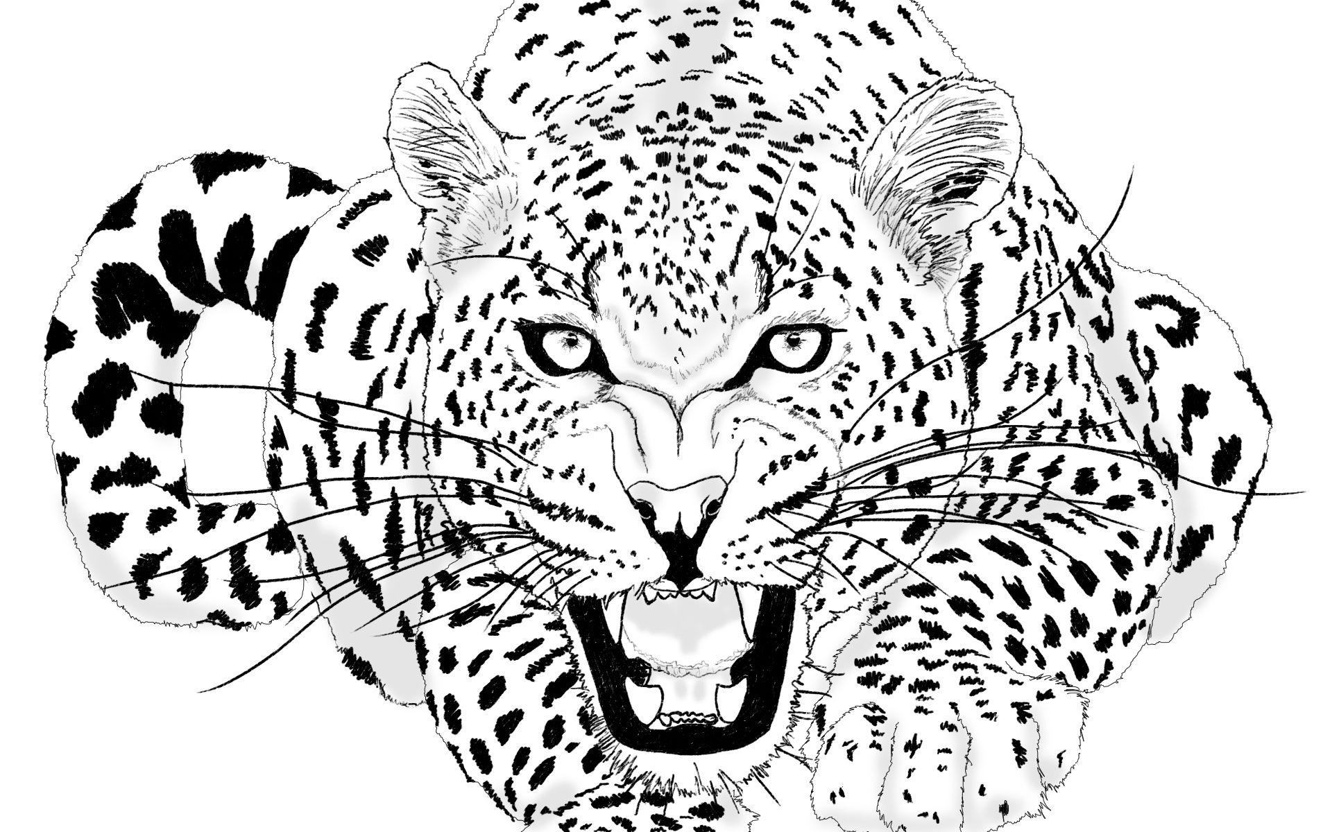 Jaguar Roar Jenn Jameson (My own illustration)   Imagine