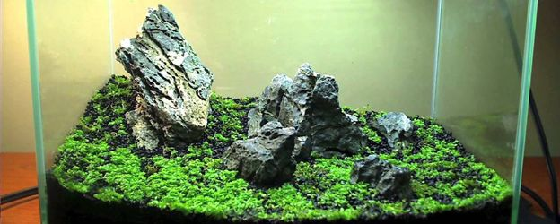 Create A Carpet In Your Planted Tank The Aquarium Guide Planted Aquarium Aquatic Plants Aquarium