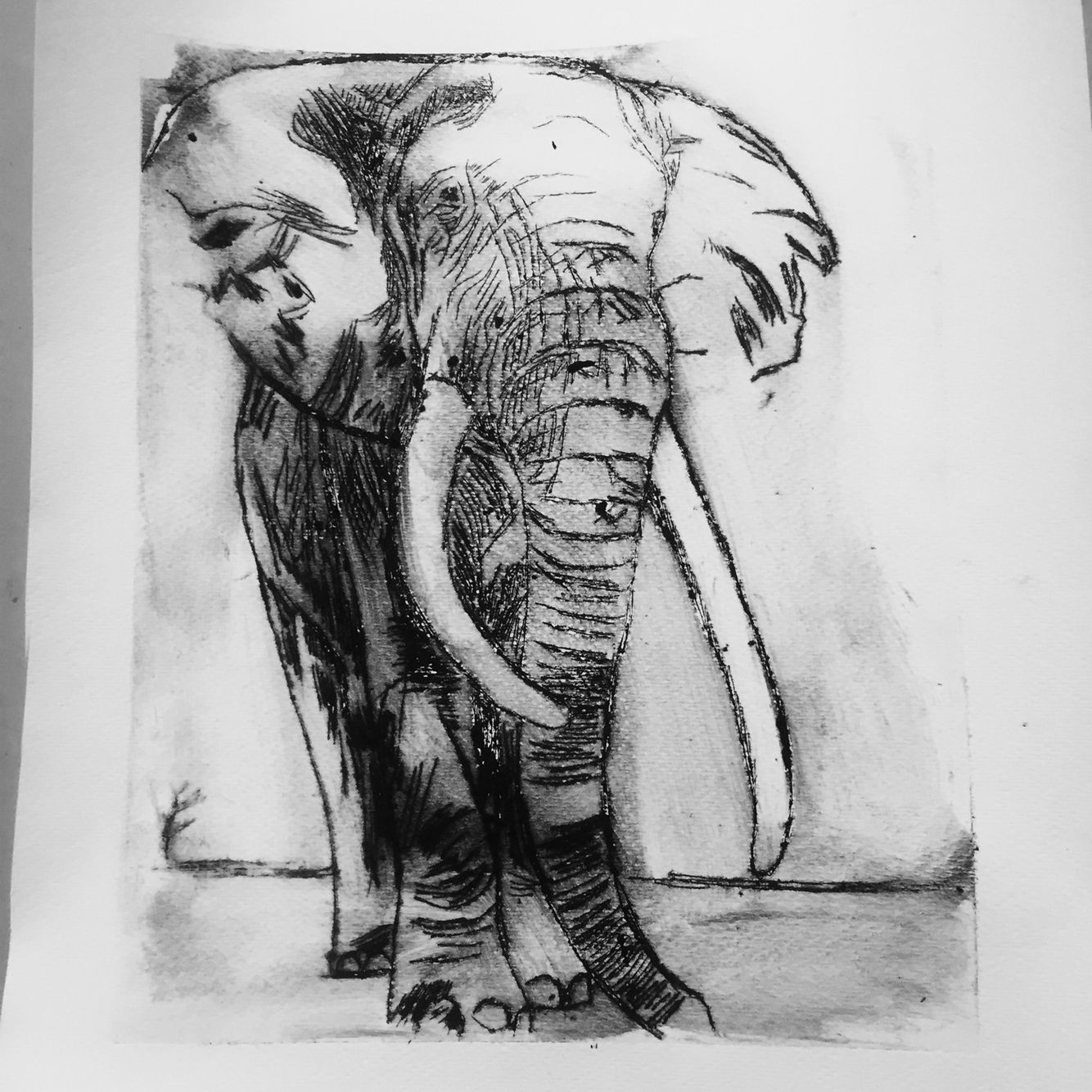 Print Example: Elephant Dry Point Etching Example For My Year 8 Animals