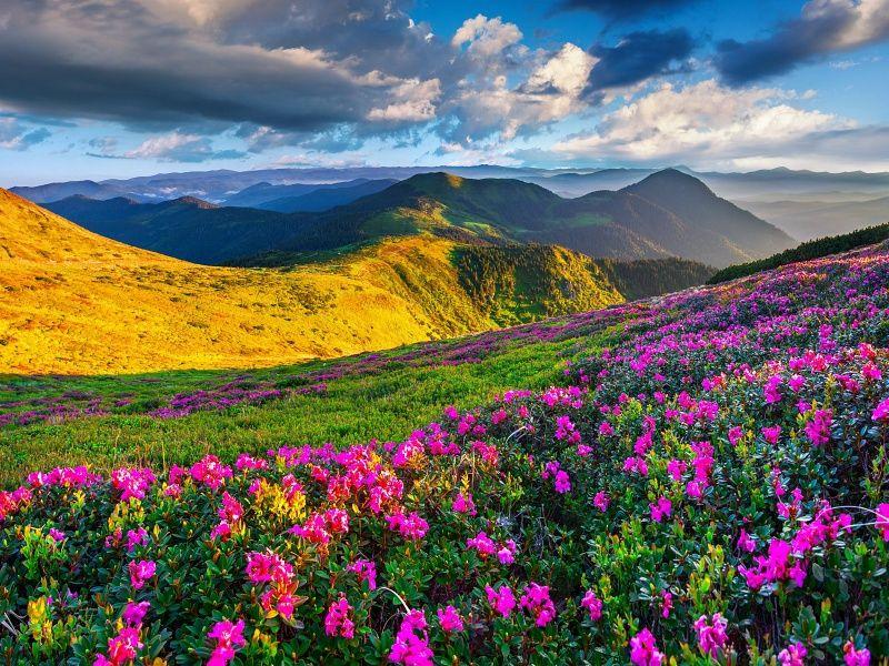Mountains Azalea Scenery uHD Wallpaper on MobDecor