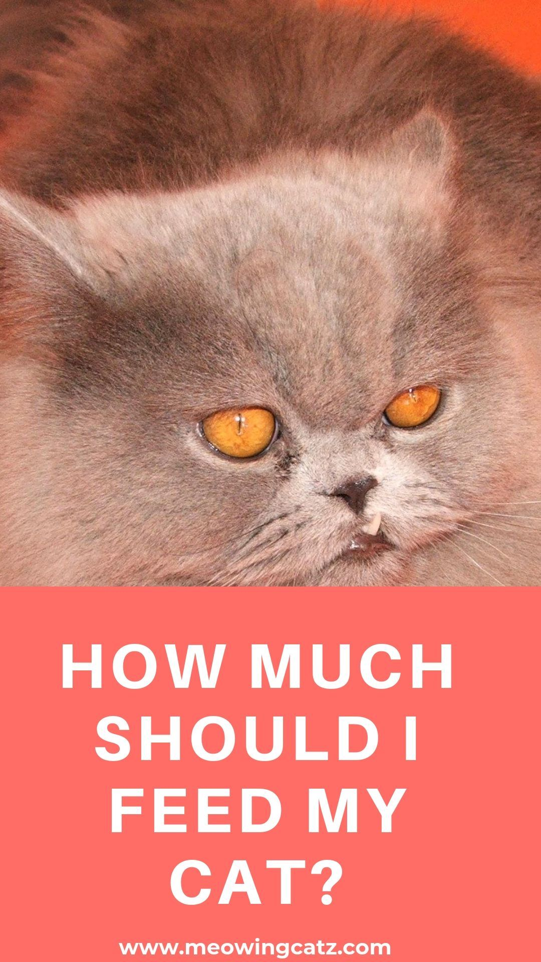 How Much Should I Feed My Cat Cat Parenting Pet Hacks Cats