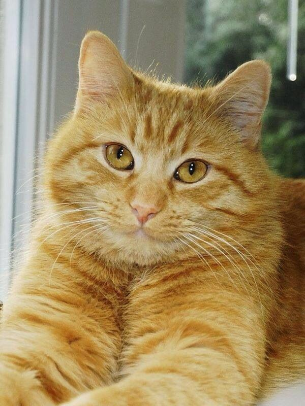 Pin By Betty Valis Jurado On Must Love Cats With Images Tabby