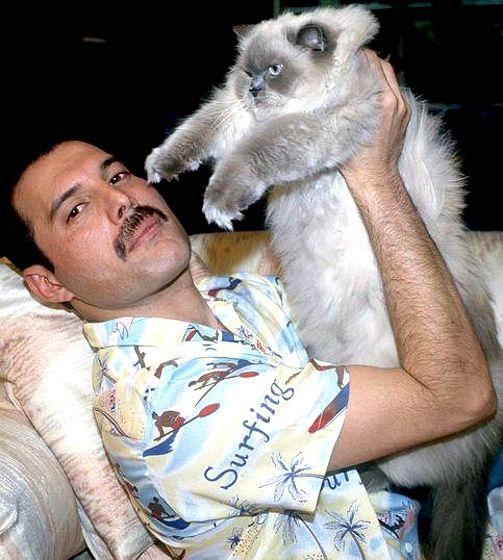 Resultado de imagen de freddie mercury cats