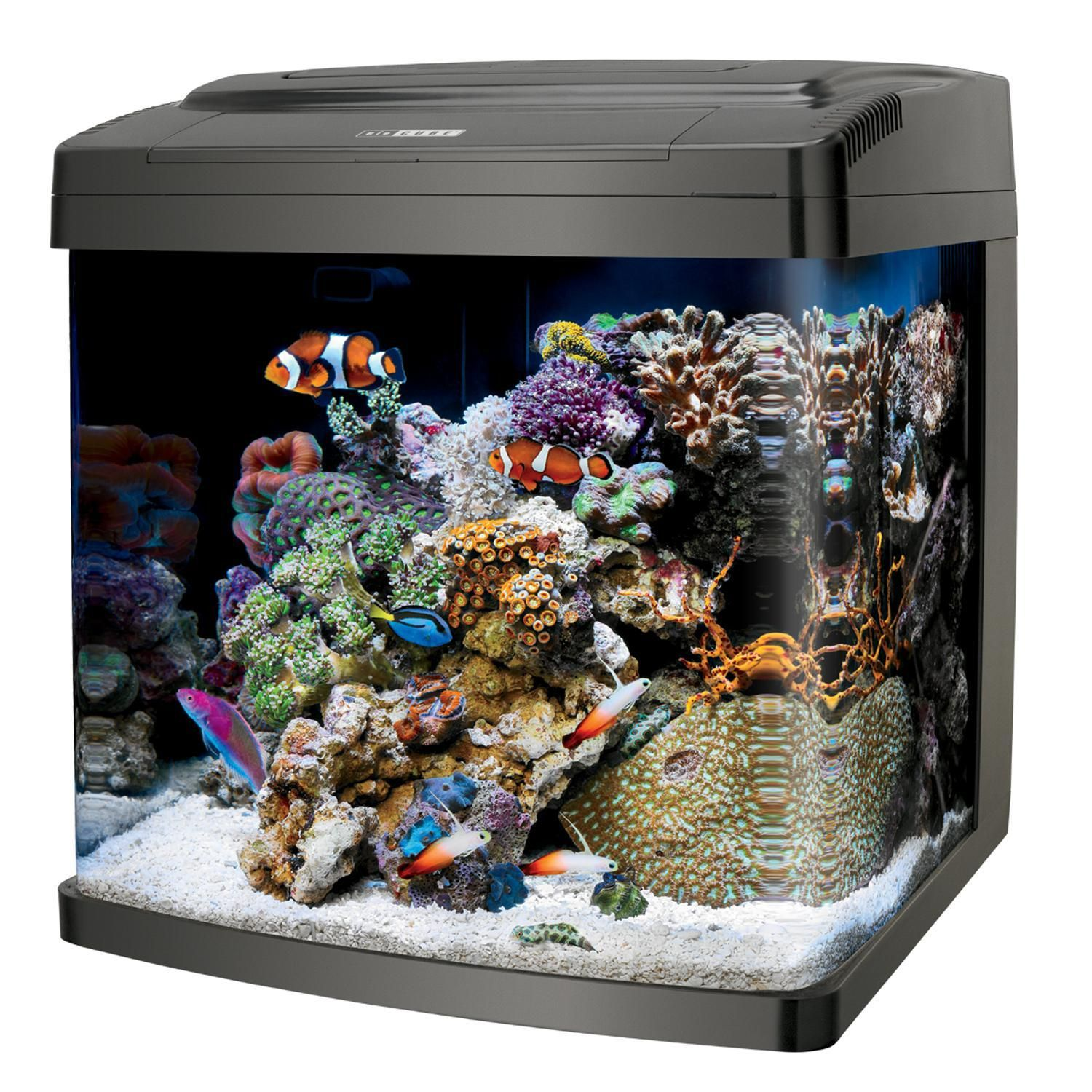 Coralife biocube pc led fish tank saltwater reef for Saltwater fish for small tank