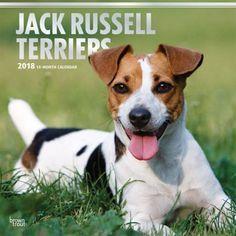 Jack Russell Terriers 2020 Wall Calendar Jack Russell Terrier