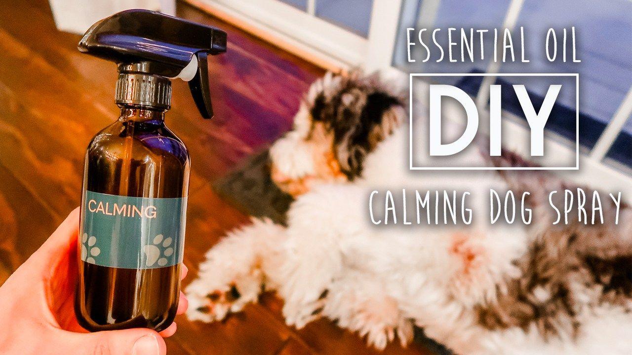 Diy calming dog spray dog spray essential oils dogs