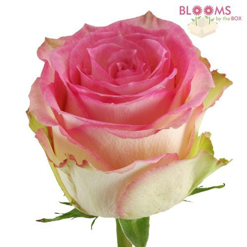 Rose Esperance 60 Cm 1 Online Wedding Flowers Wholesale Flowers Wedding Flower Trends
