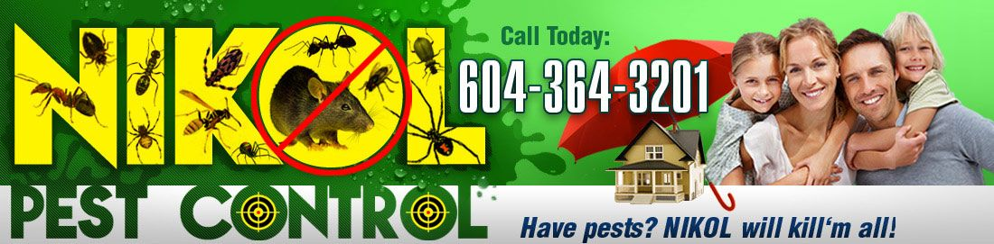 Burnaby pest control services nikol pest control offers