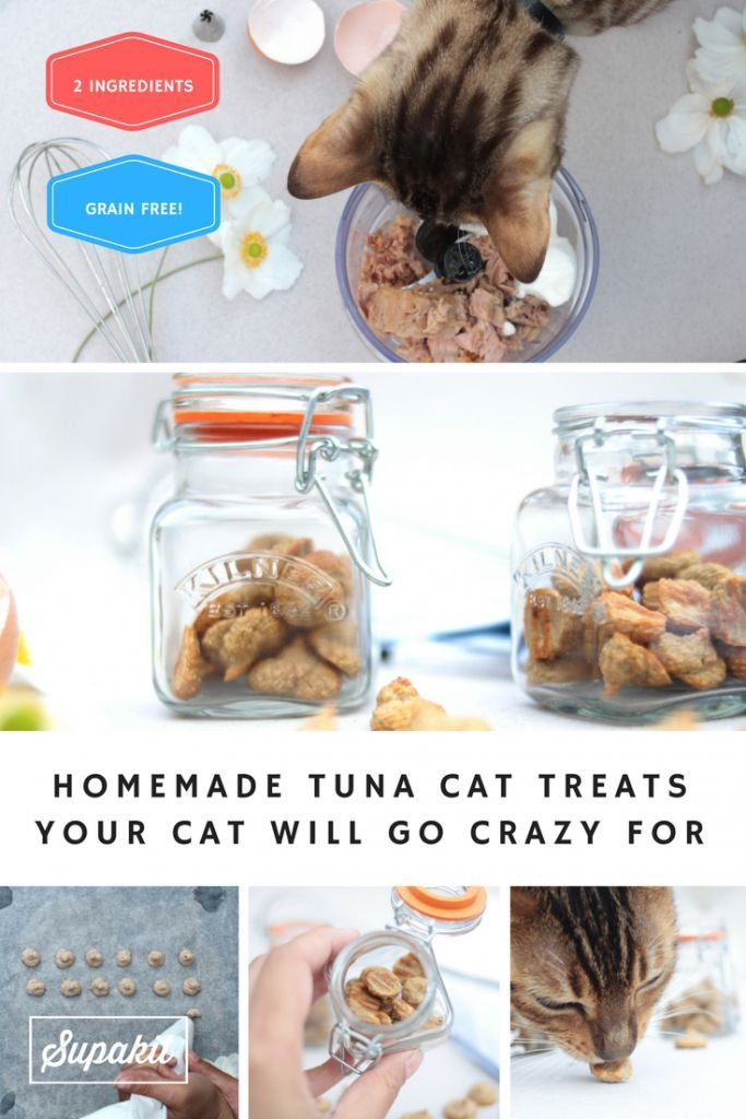 Homemade GrainFree Tuna Cat Treats Recipe Homemade