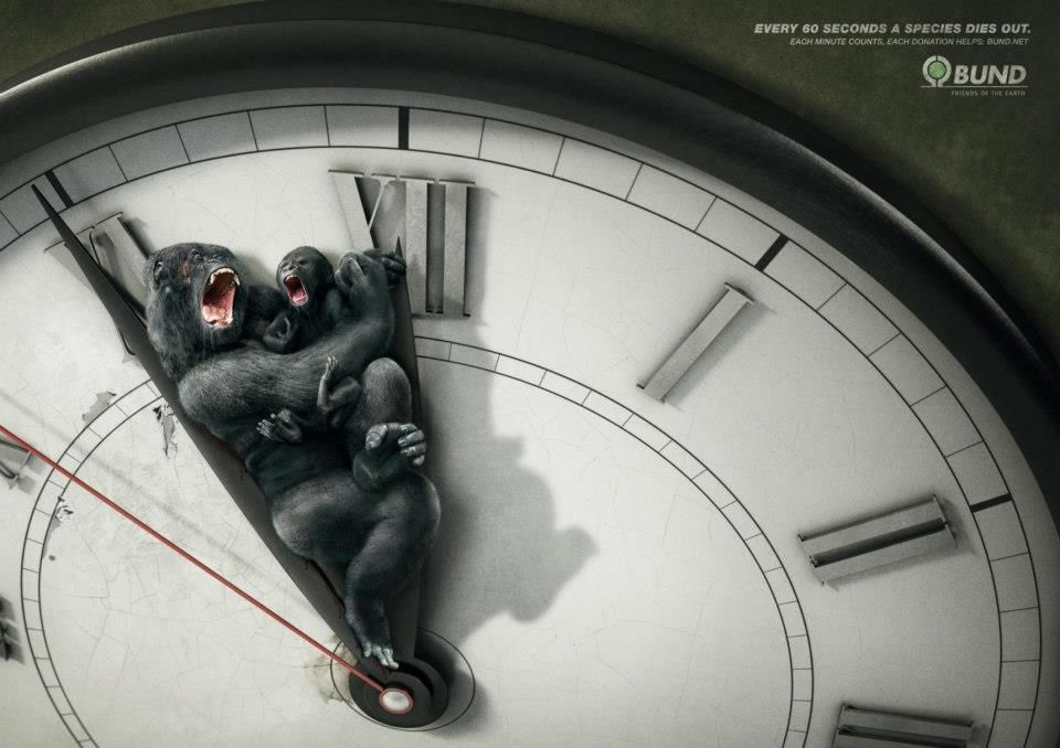 Every 60 seconds a species dies out.  Each minute counts. Each donation helps. Bund.net