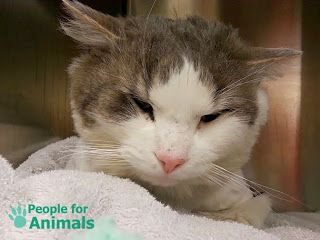 People For Animals Pet Archive: Mr Paws