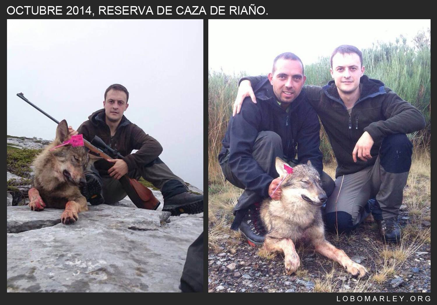 Hunting ban on wolf - in Western Slovakia in order to set up a viable population of wolf in Czech Republic's Beskidy LPA