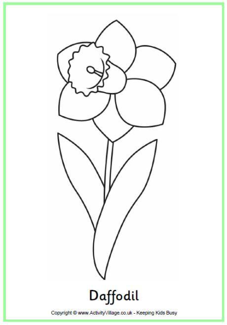 Daffodil colouring page   Patrones de fiori .   Pinterest   Dibujos ...