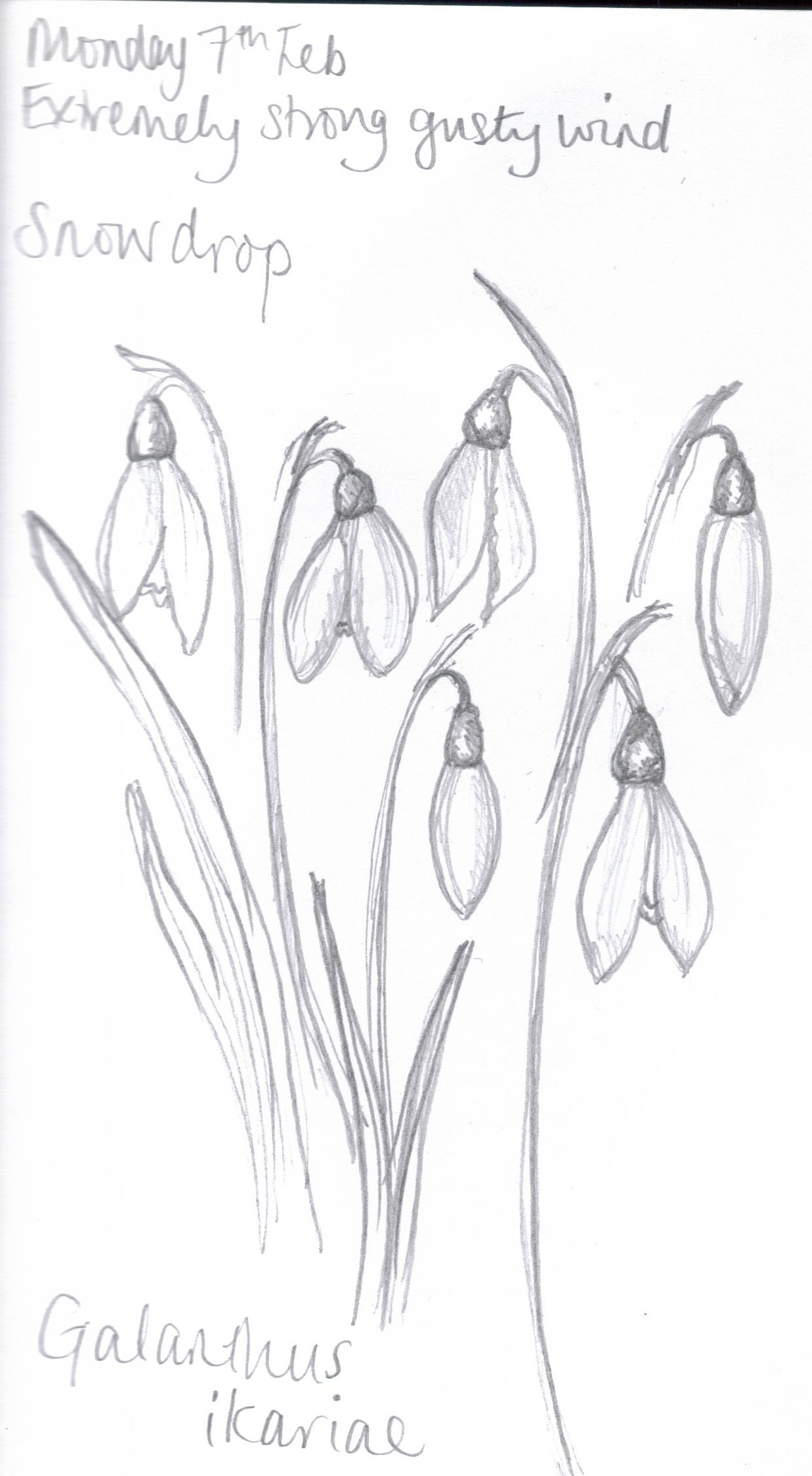 James Derek Flower Drawing Drawings Floral Drawing