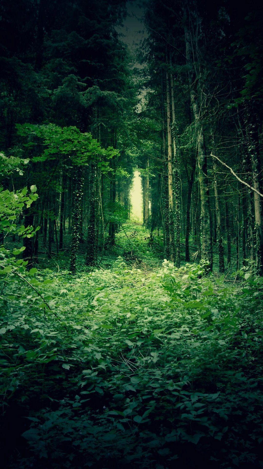 Green Forest Mobile Wallpaper Com Imagens Belas