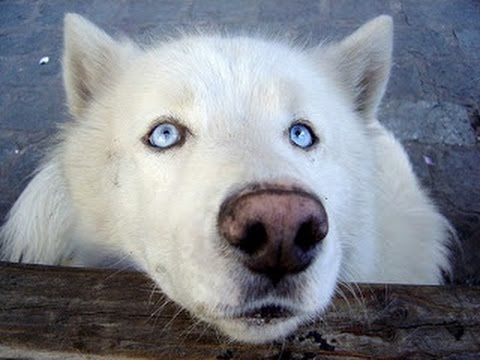 ▶ Documentary Wolf Pack - YouTube