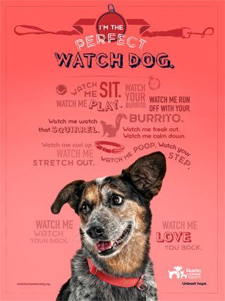 Austin Humane Society And Don T Forget Watch Strangers Come Into Your House And Carry Out Your Belongings Austin Humane Society Humane Society Foster Dog