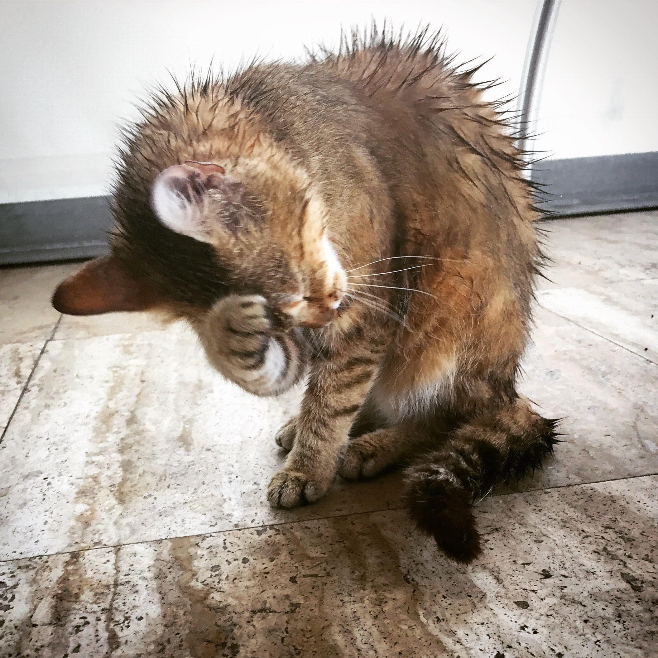 is nulo wet cat food good