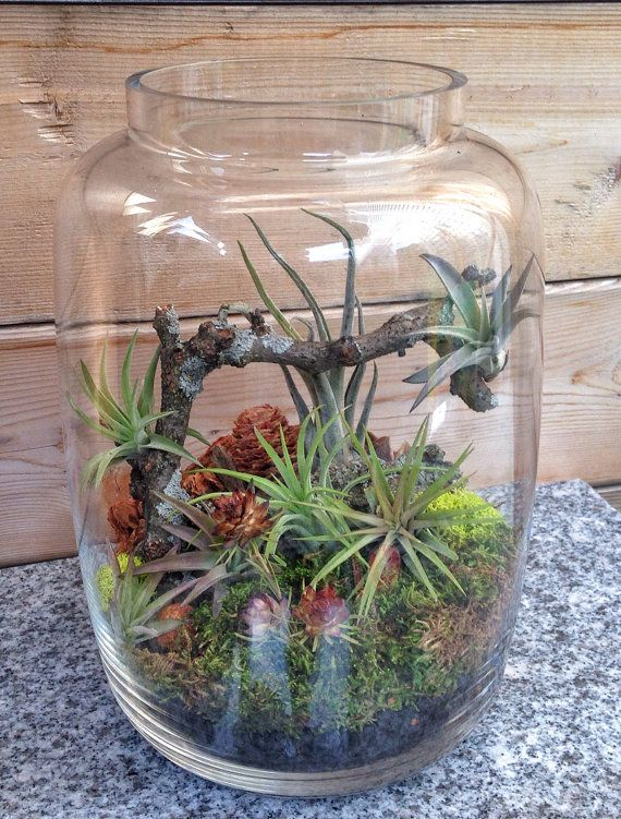 One of a Kind Medium Easy Care Low Maintenance Air Plant Terrarium - A Unique Holiday or Birthday Gift